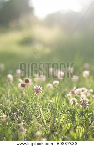 Green Grass With Flowers Before Sunset