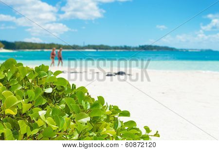 beautiful landscape of flowers on the beach with people walking in the background