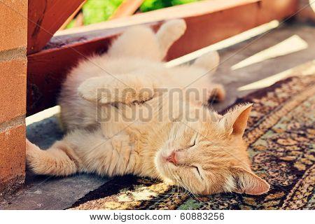 Lazy Cute Red Cat