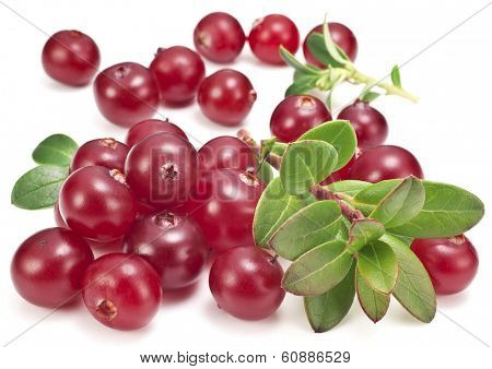 Cranberries with leaves on a white background.