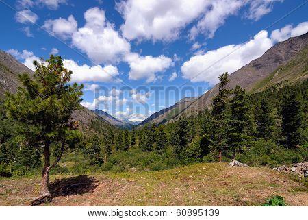 Mountain Taiga Landscape