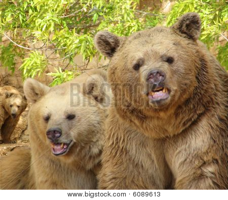 happy grizzly bears
