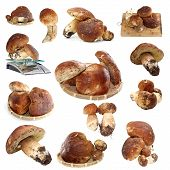 stock photo of porcini  - collection of fungi porcini ready for cooking isolated over white background - JPG