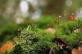 foto of lichenes  - green fluffy moss and lichen in the wood shooting a close up