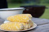 stock photo of corn-silk  - Fresh sweet corn on plate for BBQ party - JPG