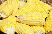 picture of corn-silk  - close up of a ripe yellow corn - JPG