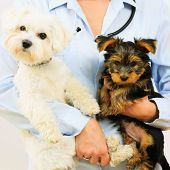 Veterinary treatment - lovely puppies and friendly veterinary