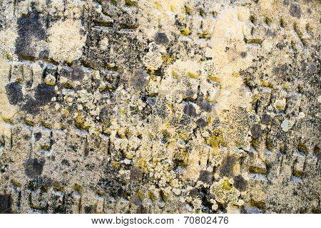 Inscription On The Old Jewish Gravestone