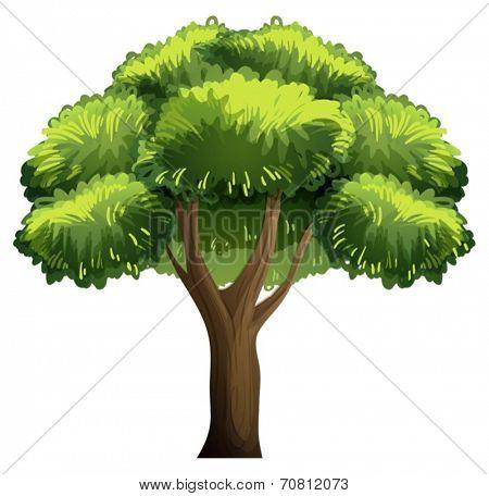 Illustration of a single oak tree