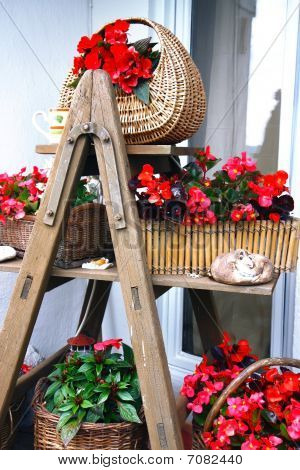 stepladder full of flowers