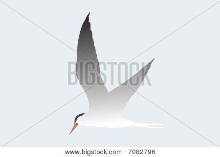 Vector illustration of albatross flying under the sky