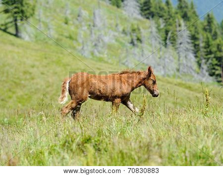 Horse In Mountain