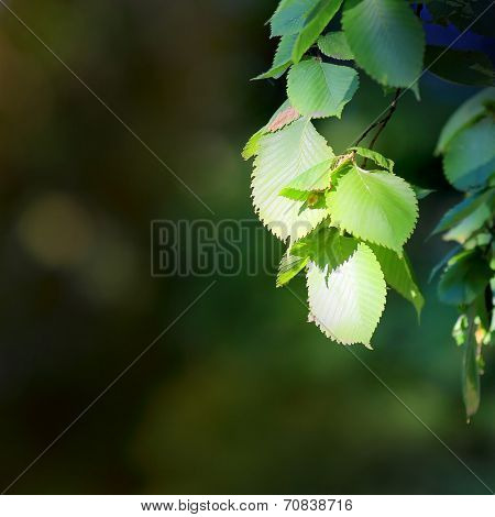 tree brunch - photo with shallow DOF