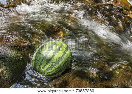Watermelon in shining brook