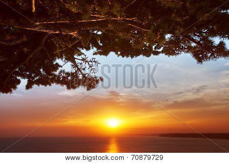 Tree Brunch Against Sunset Sky Background