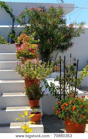 flower pots on whitewashed steps