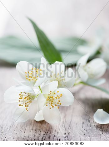 Jasmine Flowers Over Wooden Background