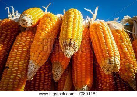 Corn on sale