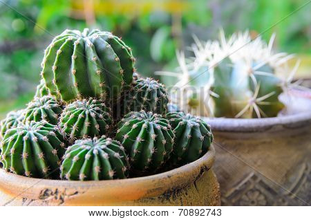 Closeup Of Potted Cactus (plant) On Windowsill