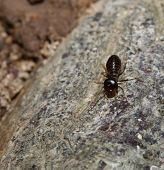 image of termite  - macro Insect Termite on the rock mountain - JPG