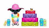 stock photo of diva  - diva pug dog with stack of luggage for the summer vacation ready for holidays - JPG