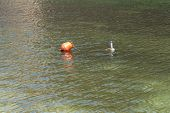 foto of temperature  - Thermometer measures the temperature of the water lake photo - JPG