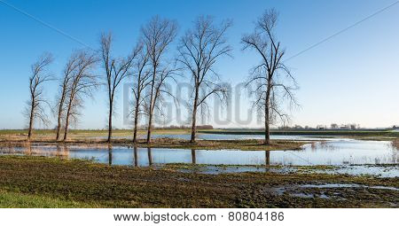 Row Of Bare Trees In Early Morning Light