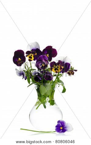 Beautiful Pansies In Transparent Vase Isolated On White Background