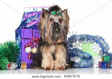 Yorkshire Terrier On A Background Of Christmas Gifts