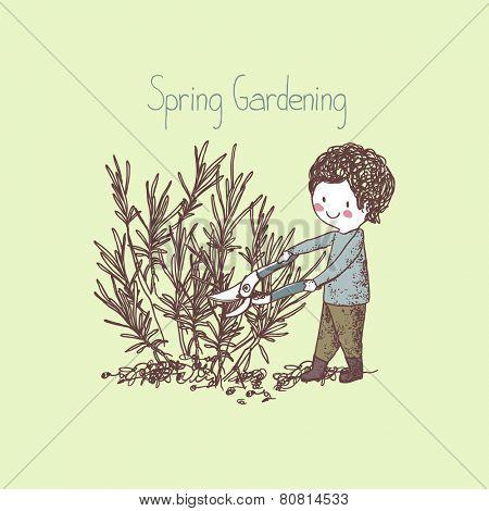 garden theme, boy pruning lavender