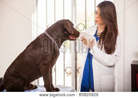 Veterinarian Using Technology