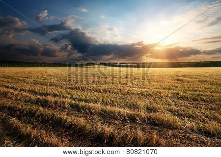 Sunbeams over field