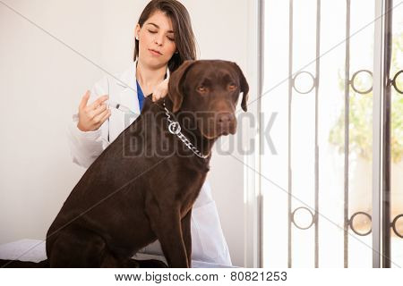 Giving Vaccine To A Dog