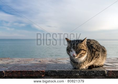 Cat basking on the beach on the waterfront