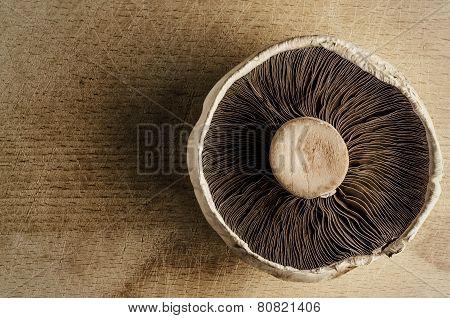 Mushroom Overhead - Vintage