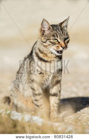 Gray Striped Cat With Yellow Eyes