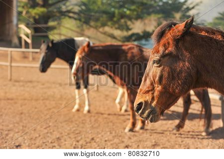 Horses In A Corral With Dirt Ground
