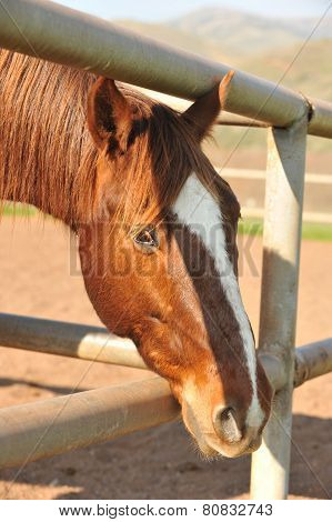 Horse In A Corral With Dirt Ground
