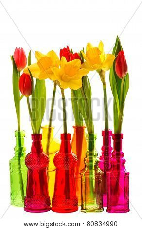 Spring Flowers Tulip And Narcissus In Colorful Glass Vases