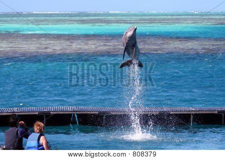 dolphin jumping at order