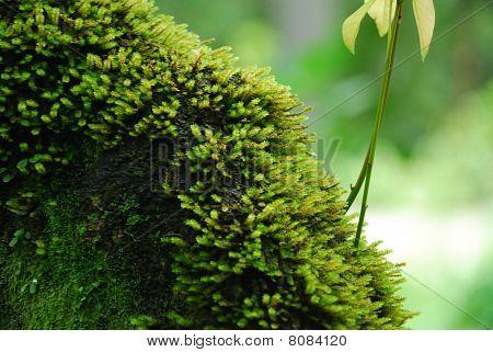 mossy green