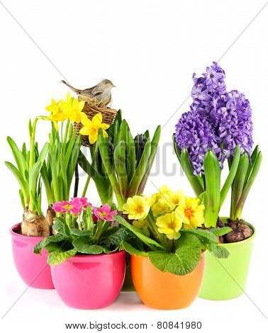 Spring Flowers With Birds Nest. Colorful Easter Decoration
