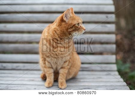 Cute Yellow Cat Sitting On The Chair