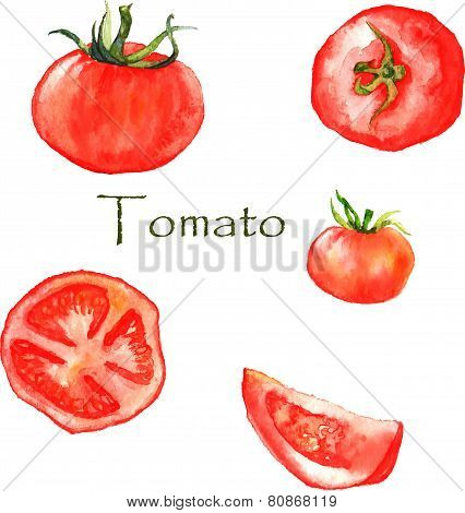Watercolor illustration with red ripe hand drawn tomatoes. Sliced and not sliced