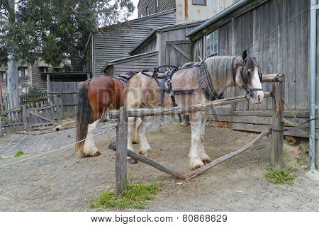 Horse of a carriage and pair