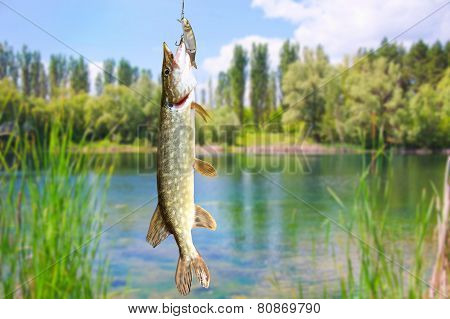 Pike Fish On The Background Of River Landscape