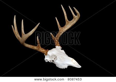 European Deer Mount Angled