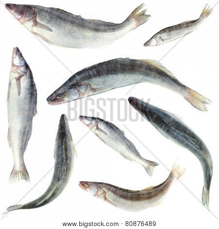 Collage of fresh fishes, isolated on white