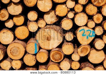 Stack Of Spruce Logs