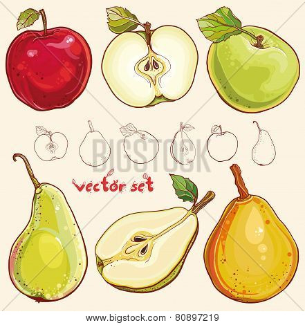 Vector Set With Fresh Apples And Pears